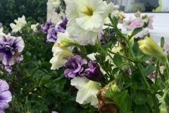gardening-13_8-image1-960