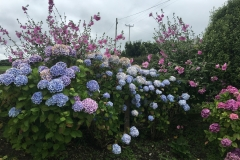 gardening-13_8-image2-960